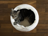 Vilten kattenmand Roos - Wit_