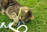 Kattenspeeltje vilt